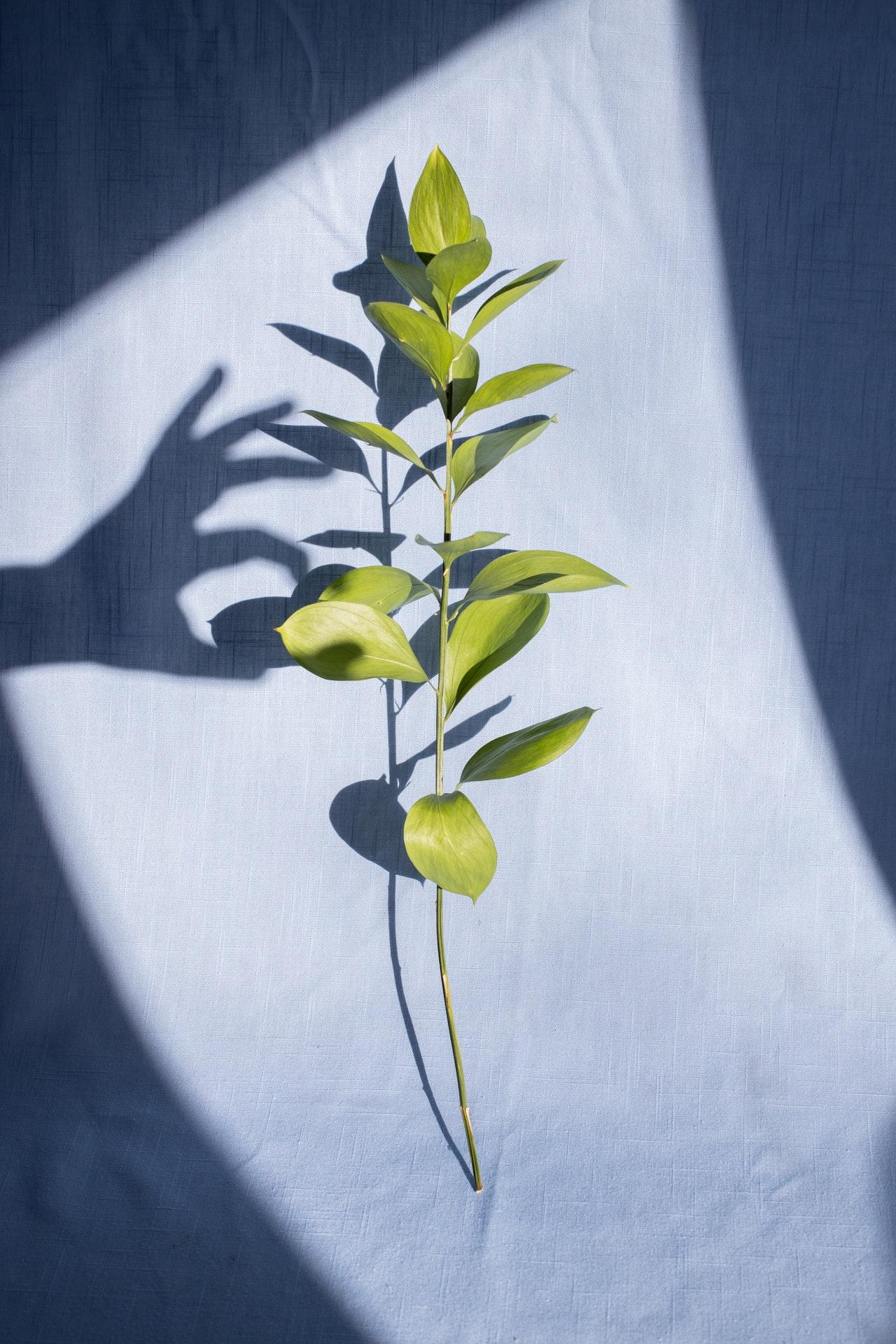 kunstplanten Maxifleur